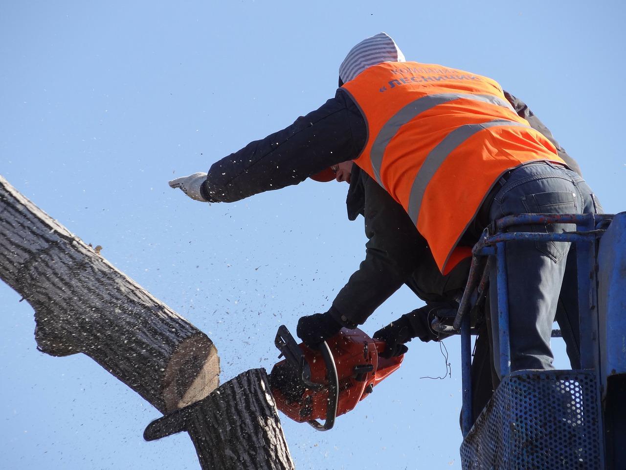 Tree Service Ogden