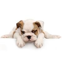 Dog Gone Rite, LLC