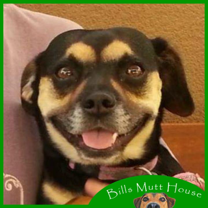 Bill's Mutt House