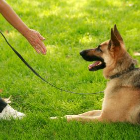 Sit Means Sit Dog Training