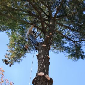 Steve's Trees