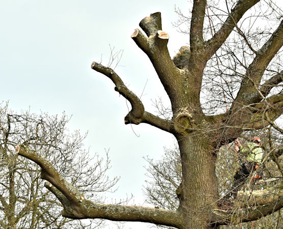Poky Tree Pros