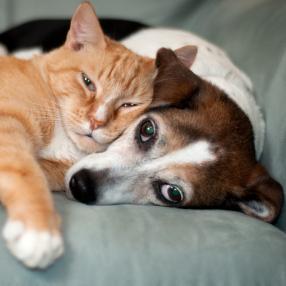 Animal Whispering