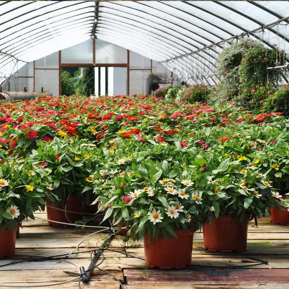 Trifilo Garden Center