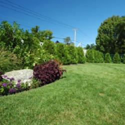 ArborPro Plant Care Experts