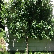 Andover Arborists