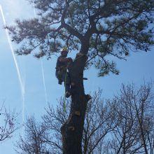 Whispering Tree Service
