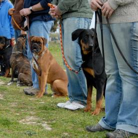Lush Puppy Pet Resort