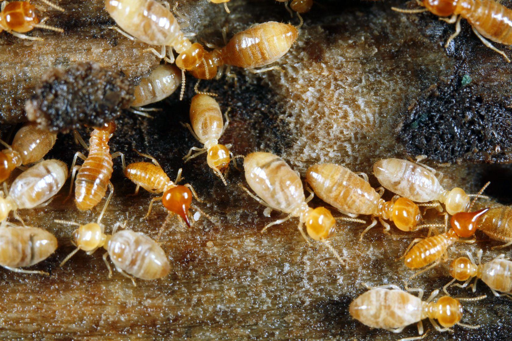 APM Advanced Pest Management, LLC