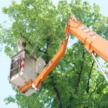 Beavers Tree Service