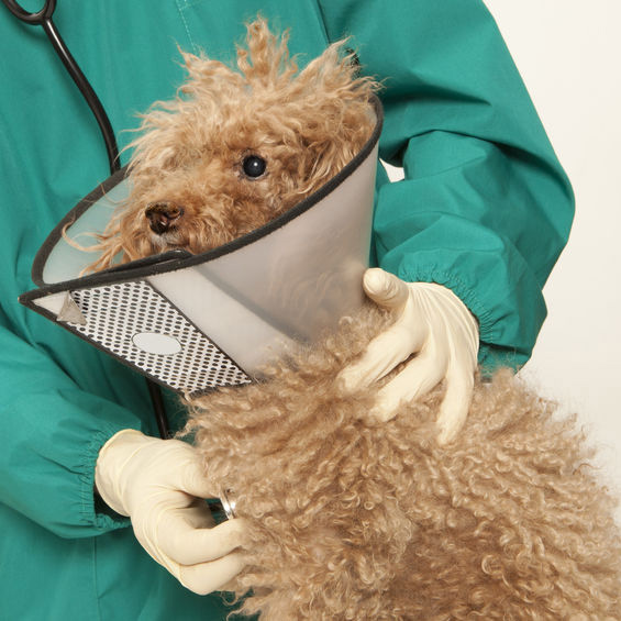 Valley Dog and Cat Hospital