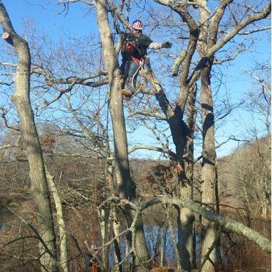 Watkins Tree Experts